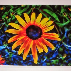 "11"" x 14"" Painted Daisy Print"